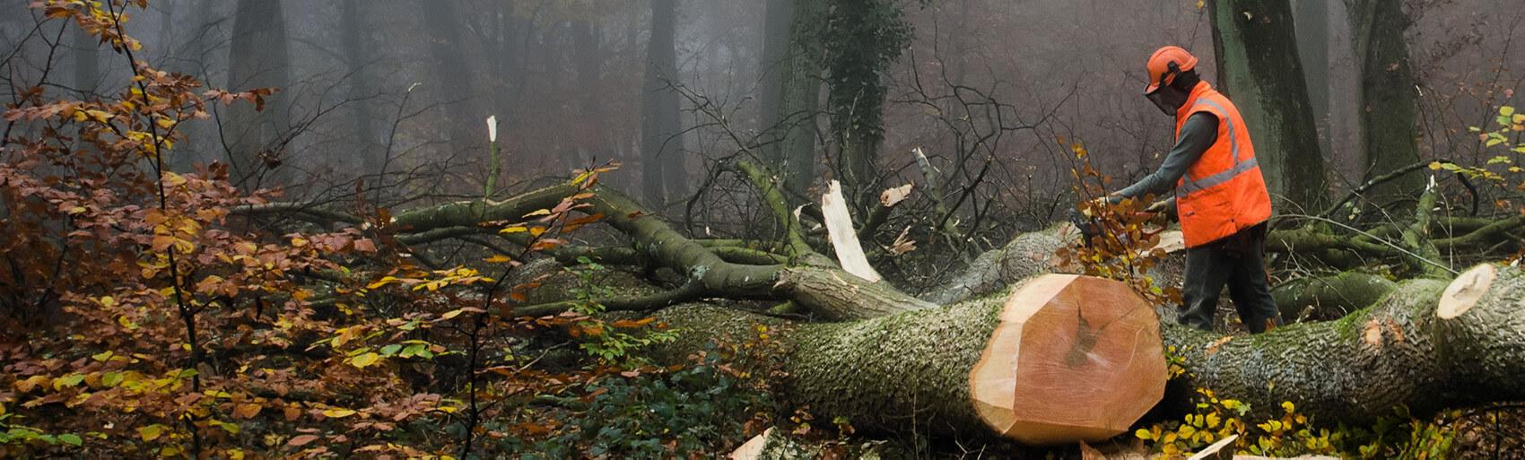 Coopérative forestière Ferland-Boilleau