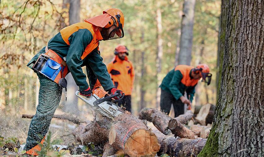 DÉBROUSSAILLEUR / DÉBROUSSAILLEUSE (5 postes) Coopérative forestière Ferland-Boilleau