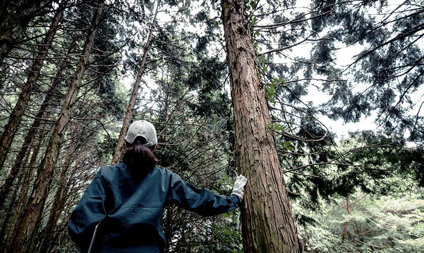 Titre du poste 1 anglais Coopérative forestière Ferland-Boilleau