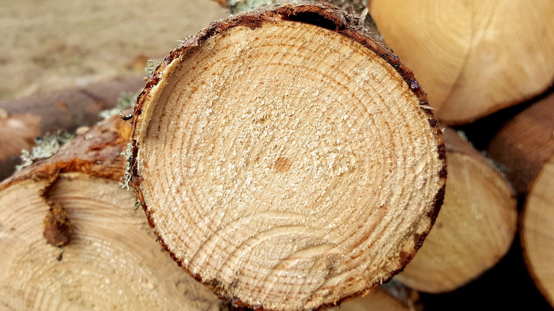 Mécanicien (ne) d'entretien industrielle Coopérative forestière Ferland-Boilleau