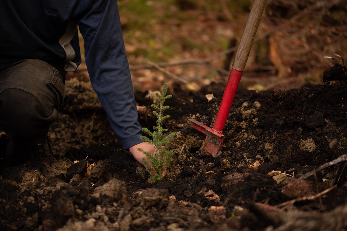 Développement durable Coopérative forestière Ferland-Boilleau