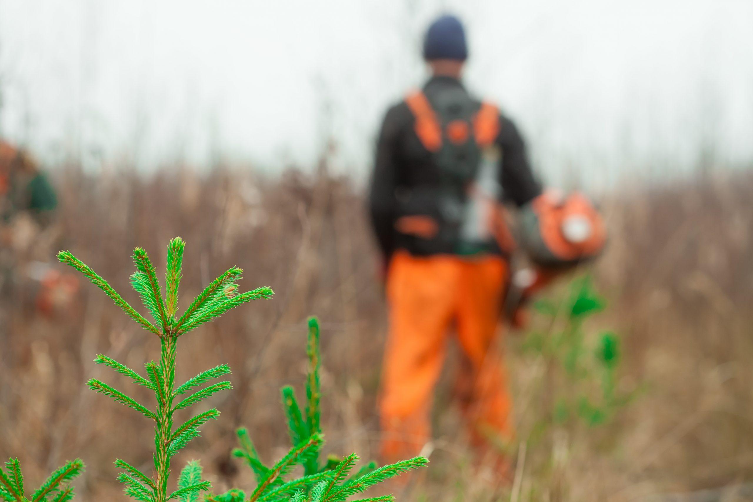 REBOISEUR / REBOISEUSE (10 postes) Coopérative forestière Ferland-Boilleau